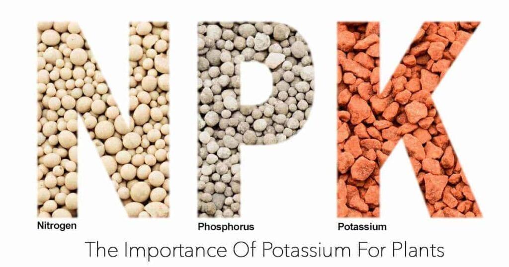 the importance of potassium for healthy potassium deficiencyplants