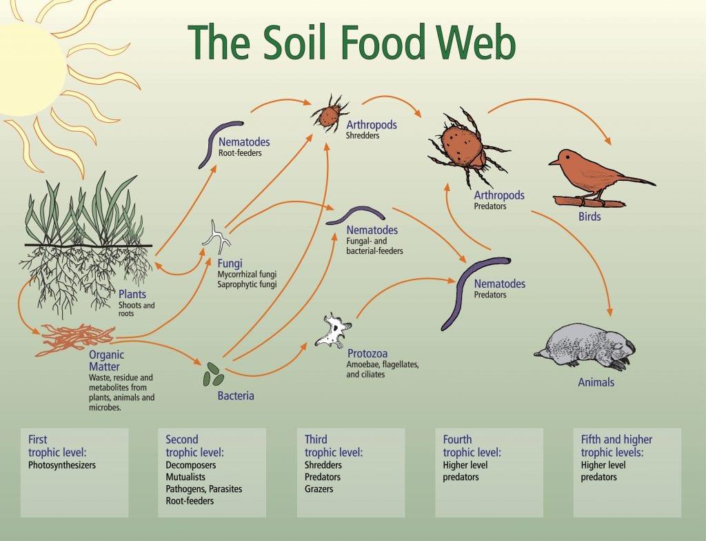 La red alimentaria del suelo |  Intercambio de semillas de exposición al sur