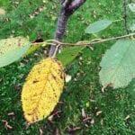 Las amenazas más comunes para los árboles en su paisaje ⋆ Gran blog sobre jardinería