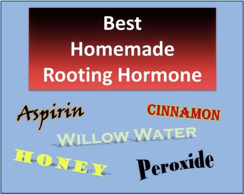 Best Rooting Hormones - Do Homemade Rooting Hormones Work?
