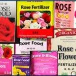 Las plantas no necesitan ser alimentadas, ¡deja de fertilizar!