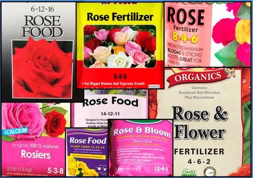Which rose fertilizer has the correct NPK?