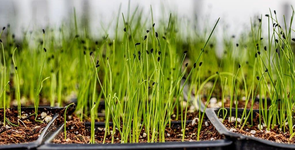 Las semillas comienzan en marzo - estiercoles