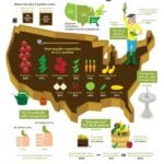 Las verduras más populares cultivadas en jardines