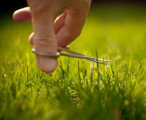 Lawns reduce CO2 levels