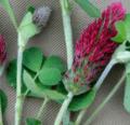 Los cultivos de otoño y su importancia