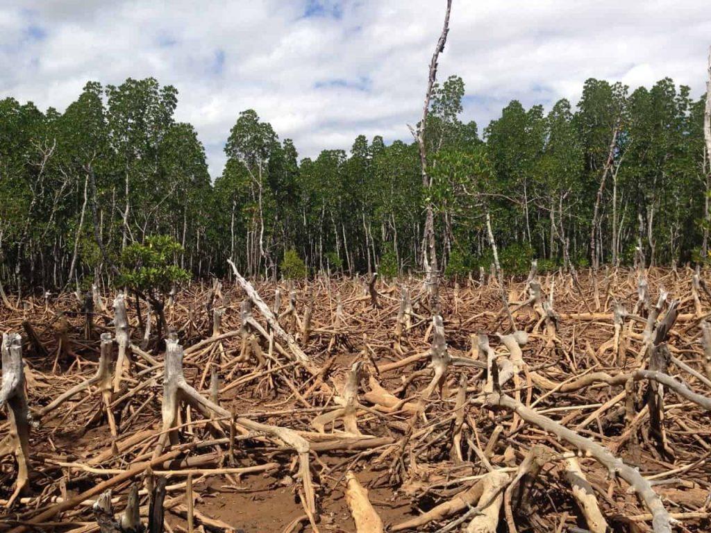 Los devastadores efectos de la deforestación ⋆ Gran blog sobre jardinería
