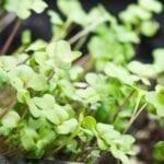 Luz artificial para plántulas |  Luces de cultivo - estiercoles
