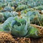 Manejo Integrado de Plagas Orgánicas    Intercambio de semillas de exposición al sur