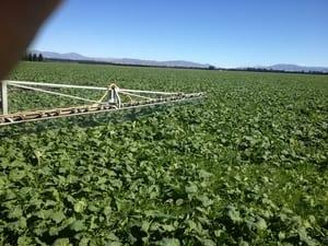 Mantenimiento de cultivos forrajeros