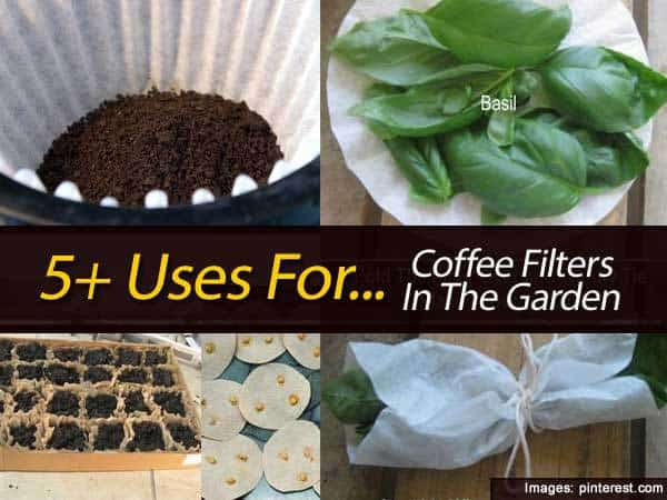 using coffee filters in the garden