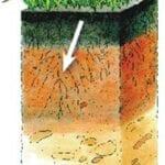 Incremento de Materia Orgánica y Biología en Sistemas Pastorales - Compuesto