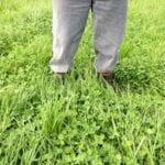 Mejorar la eficacia de los fertilizantes