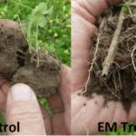 Mejorar la germinación de semillas con EM