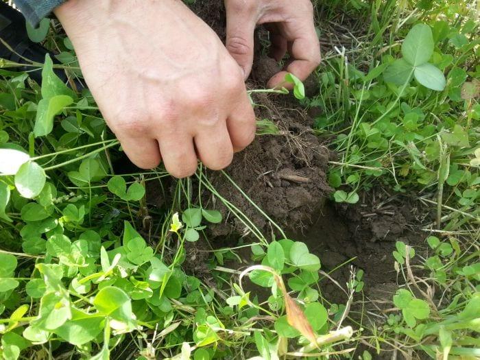 Mejorar la salud y el rendimiento del suelo