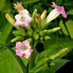 Productos químicos en las plantas