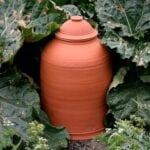 Mitos del ruibarbo - mitos del jardín
