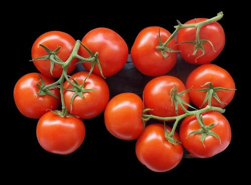 A Tomato Myth is Born - More About Tomato Ripening