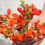No ignores las flores de verduras, hierbas y frutas ⋆ Gran blog de jardinería