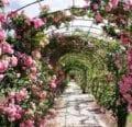Paisajismo de un jardín de rosas - Elección de rosas de jardín para su paisaje -