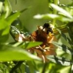 Pesticidas involucrados en la muerte de abejas y aves ⋆ Big Blog Of Gardening