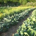Planificación de jardines de otoño e invierno