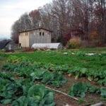 Planificación y plantación para una abundante cosecha de otoño e invierno.