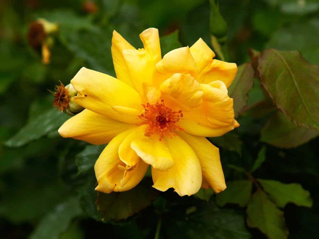 Plantar, regar, fertilizar, podar ⋆ Gran blog de jardinería