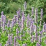 Plantar semillas de flores para abejas y polinizadores - Estiercoles.com