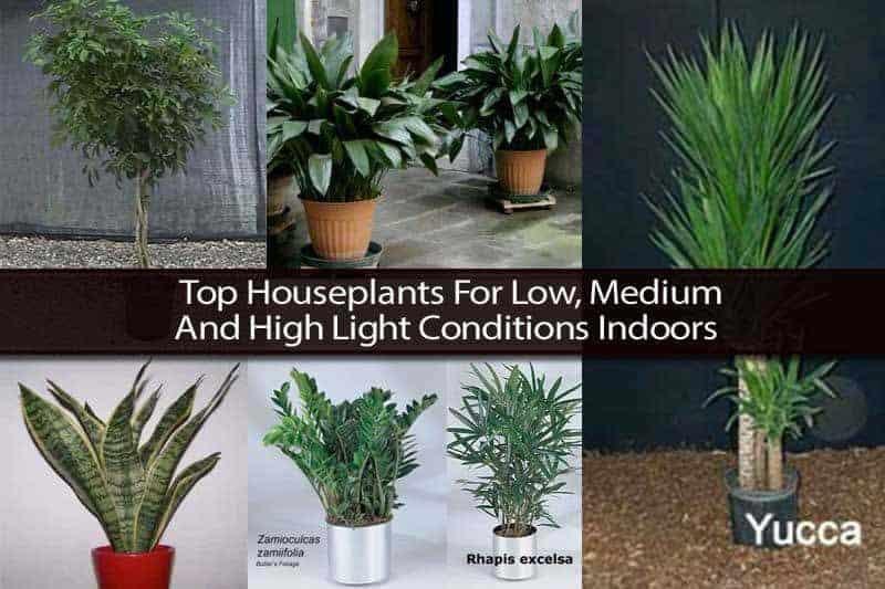 low medium high light houseplants