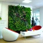 Plantas de purificación de aire: ¿funcionan?