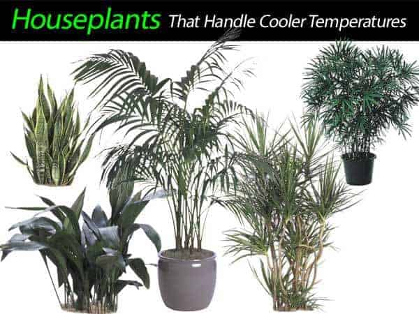 cold tolerant houseplants