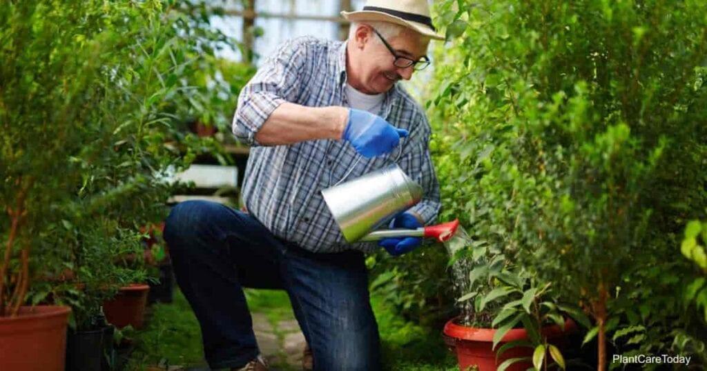 neem oil as a soil drench