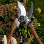 Podadora de palisandro y cuchillo Hori Hori