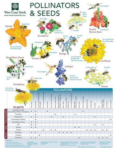 Infografía de polinizadores y semillas.