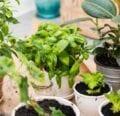 Por que todo jardinero de interior necesita tierra de diatomeas