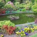 Prepara tu estanque de jardín para el verano ⋆ Gran blog de jardinería