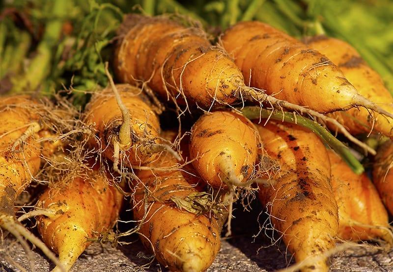 Preparación del suelo, siembra y cosecha ⋆ Gran blog sobre jardinería