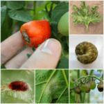 Problemas comunes del jardín y cómo solucionarlos.