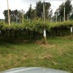 Producción de vino sustentable
