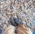 Próximo evento de recuperación de semillas antes de la conferencia VABF
