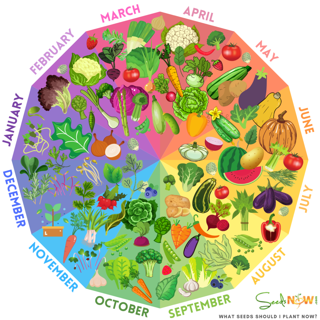 RUEDA DE PLANTAR - ¡Descubra cuándo es el mejor momento para plantar!