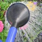 Regar las plantas durante una ola de calor ⋆ Great gardening blog