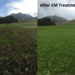 Remediación y mejora de cultivos