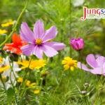 Sembrar semillas de flores silvestres perennes para lograr el éxito