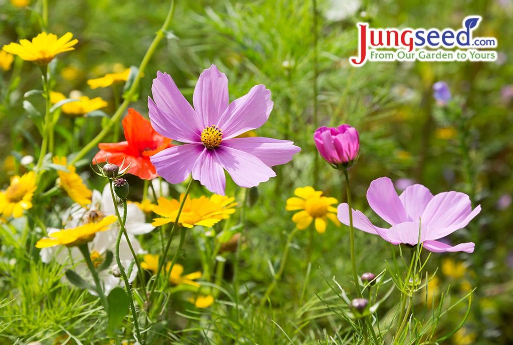 Hermosas flores silvestres que crecen en un prado