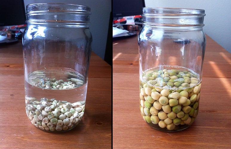 semillas antes del brote con remojo durante la noche