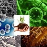 Serie de salud del suelo - Microbios del suelo