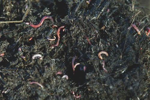 Serie de salud del suelo: construcción de humus en nuestros sistemas agrícolas