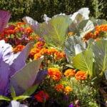 Siembra complementaria: ¿son las plantas aromáticas la mejor opción?